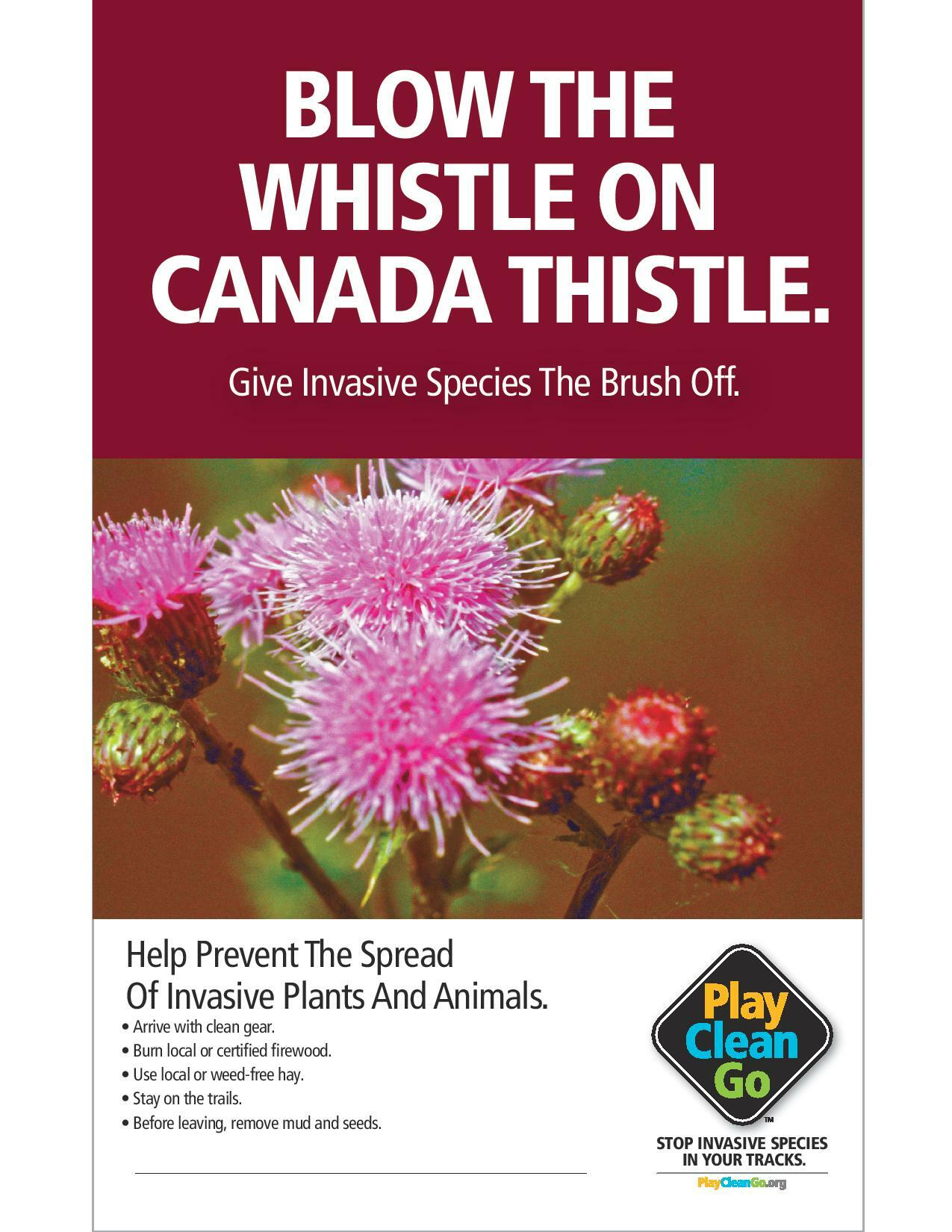 PlayCleanGo-BlowWhistle_CanadaThistle_8.5x11-page-001